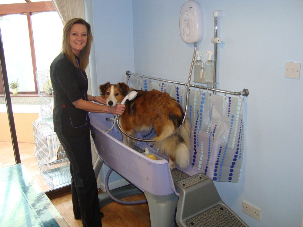 Dog Grooming Microchipping Llanelli From Maesybont Doggrooming Co Uk